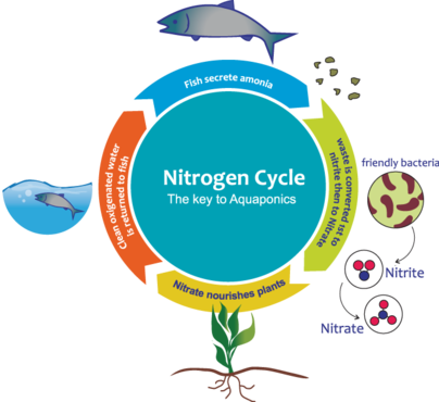 Nitrogen Cycle Other  Draft # 13 by nelly83