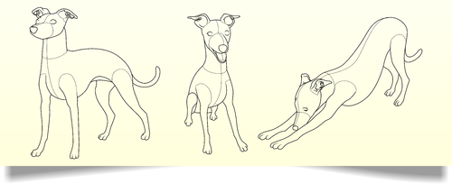 drawing of Italian Greyhound dog in different positions Other  Draft # 25 by Scarl8