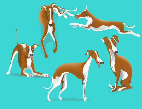 drawing of Italian Greyhound dog in different positions Other  Draft # 29 by DesignSky14