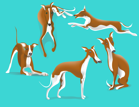 drawing of Italian Greyhound dog in different positions Other  Draft # 30 by DesignSky14