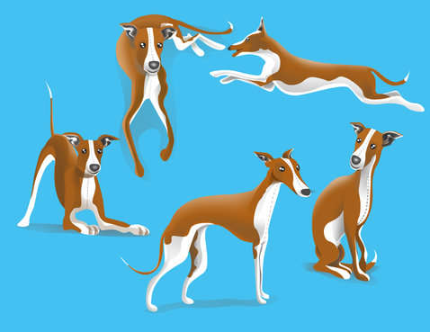 drawing of Italian Greyhound dog in different positions Other  Draft # 38 by DesignSky14