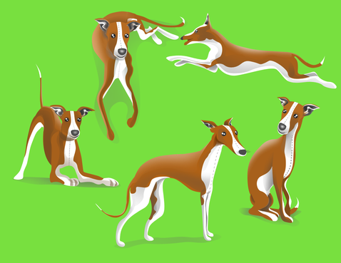 drawing of Italian Greyhound dog in different positions Other  Draft # 39 by DesignSky14