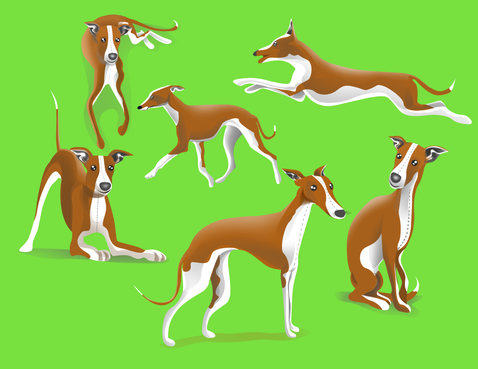 drawing of Italian Greyhound dog in different positions Other  Draft # 41 by DesignSky14