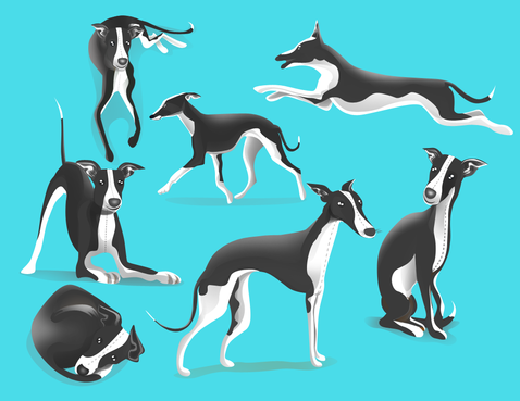 drawing of Italian Greyhound dog in different positions Other  Draft # 44 by DesignSky14