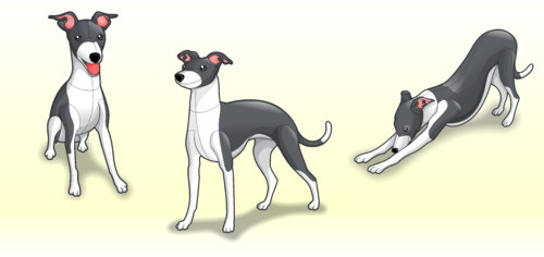 drawing of Italian Greyhound dog in different positions Other Winning Design by Scarl8
